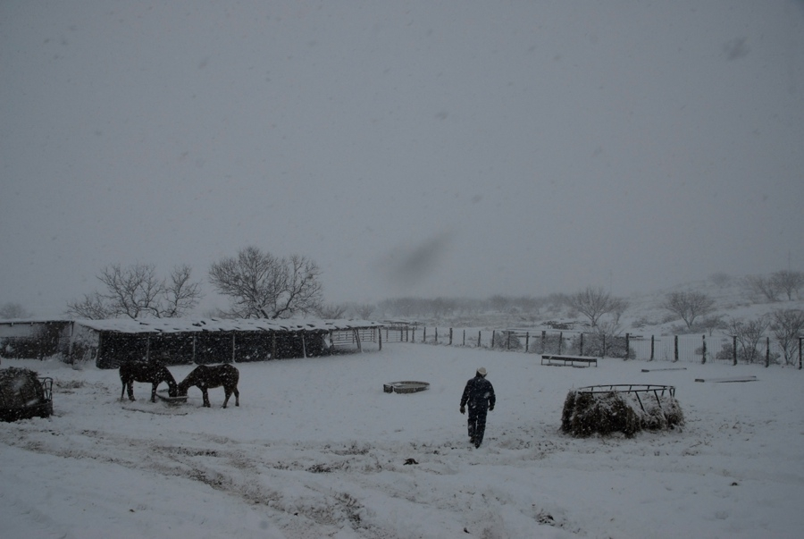 Getting Ready To Feed the Horses - TX.