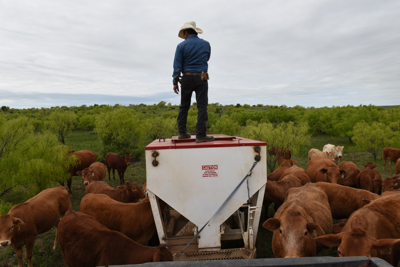 Juan Counting Cattle Before We Feed